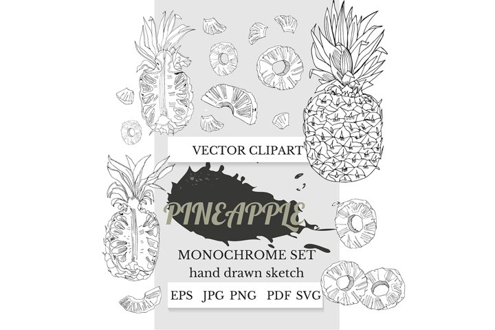 Hand drawn ink sketch of pineapple. Pineapple clipart.