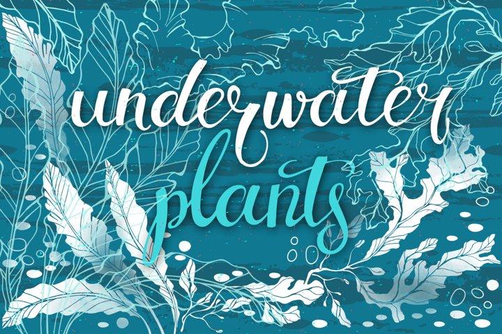 Underwater plants. Graphic set.