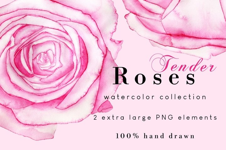 Pink Watercolor Roses PNG Clipart Set | Love Sublimation