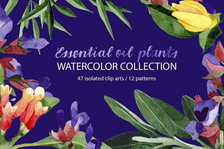 Essential oil plants. Watercolor collection