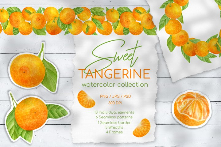 Sweet Tangerine. Hand drawn watercolor clipart collection