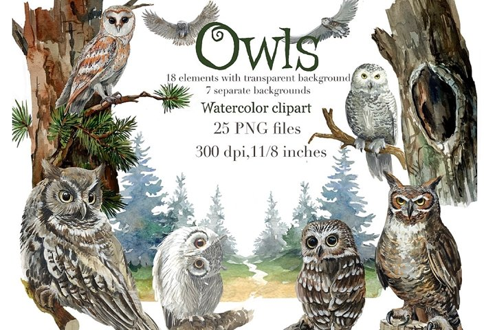Owls watercolor clipart, forest birds night background
