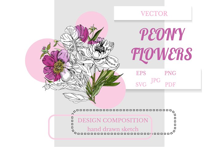 Hand drawn bouquet of peony flowers. Pink floral clipart