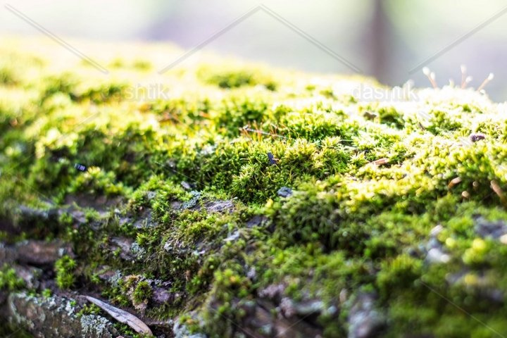 dense and lush forest moss growing on a tree in summer