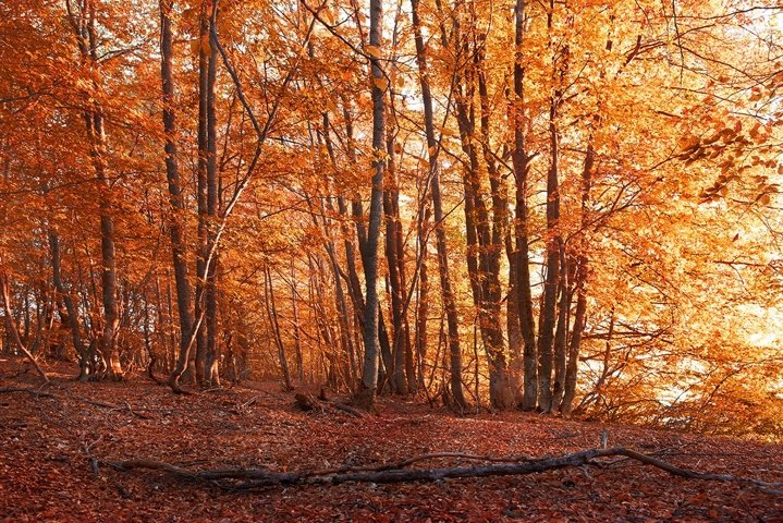 Autumn forest. Trees with red and yellow leaves