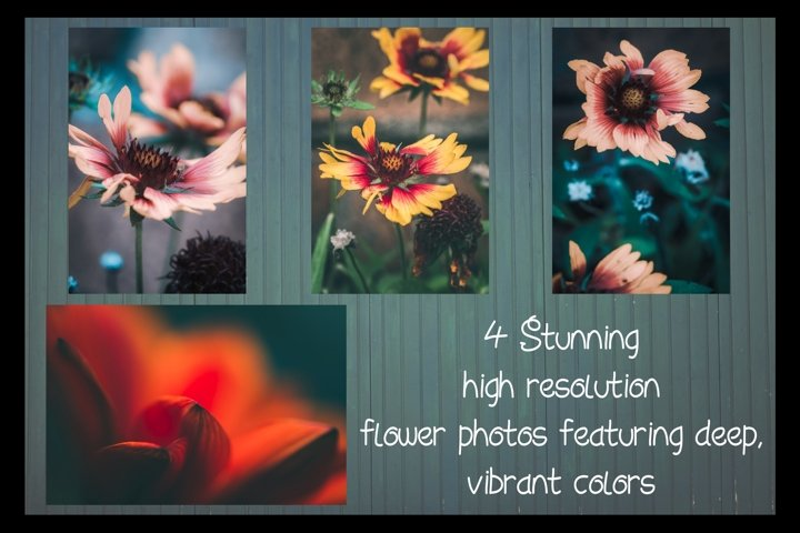 4 Stunning and Vibrant Flower Photos