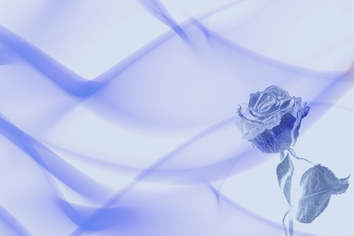 Abstract Blue Rose for Wedding Background
