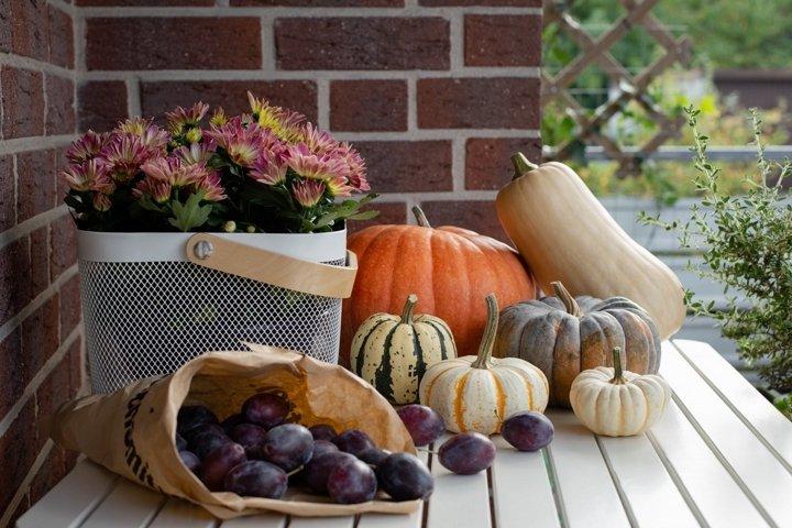 Autumn still life with seasonal colorful pumpkins.