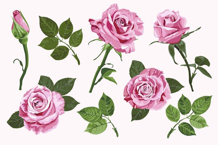 Pink vector roses elements set