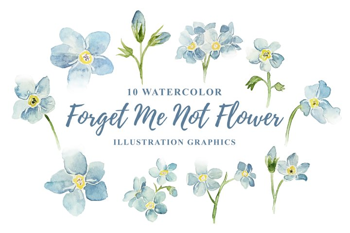 10 Watercolor Forget Me Not Illustration Graphics