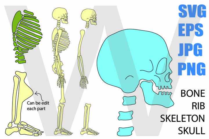 Skeleton Whole Body sideview - SVG-EPS-JPG-PNG