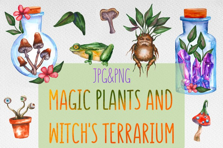 Magic plants and witchs terrariums