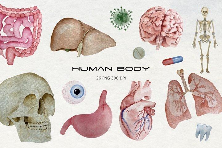 Watercolor Human Organ Clipart