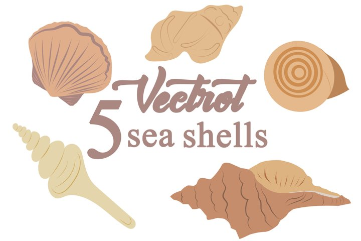Marine sea shells vector set illustrations