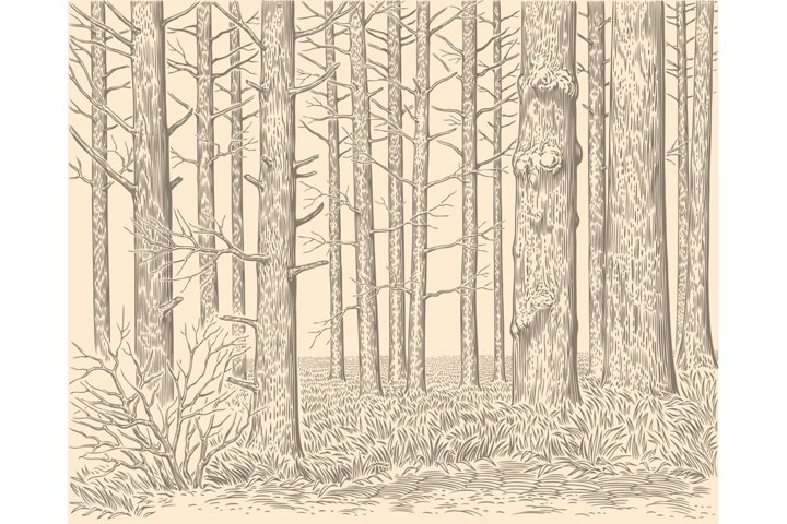 Forest stand. Hand drawn illustration. Vector engraving.