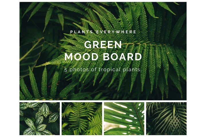 5 photos of tropical plants