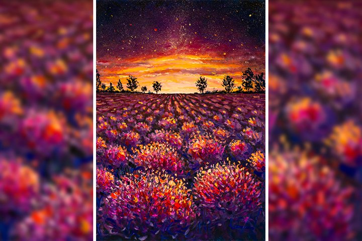 Lavender field flowers at sunset