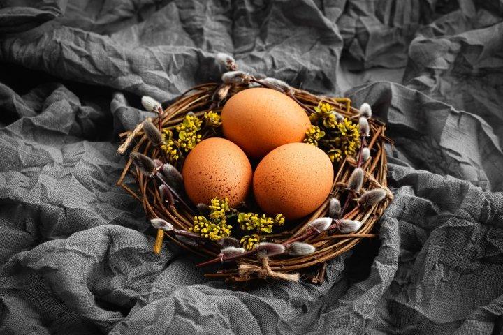 Three chicken eggs in birds nest with spring twigs