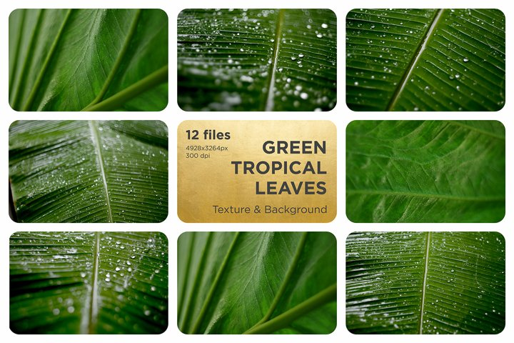 Green tropical leaves Texture Background. Palm Tree leaves