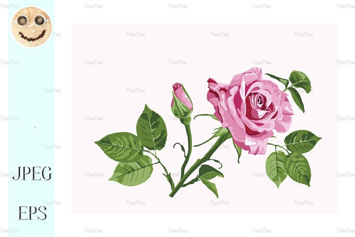 Vector greeting card with pink roses on the white background