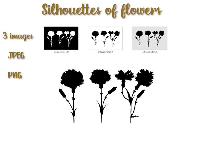 Floral illustration. Silhouettes of carnations