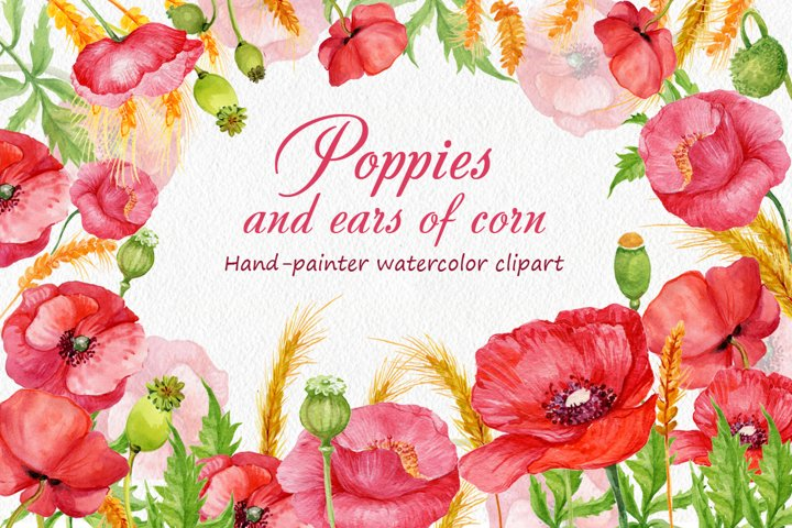 watercolor. Poppies and ears of corn