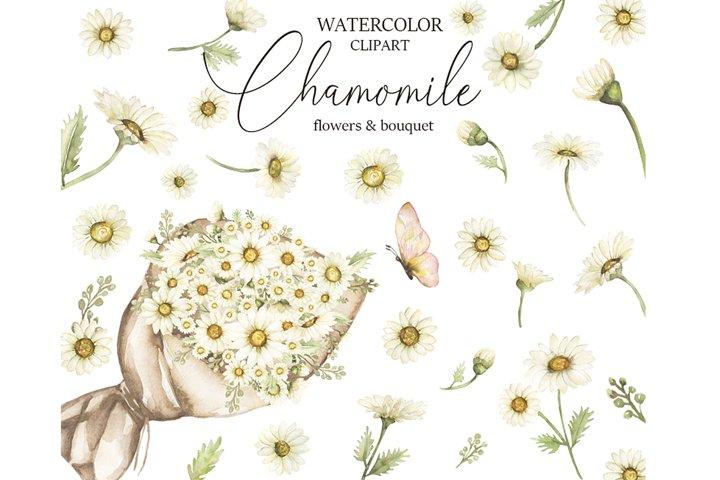Watercolor Chamomile Clipart