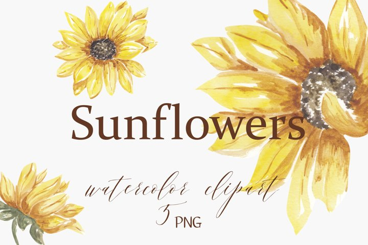 Sunflowers png clipart, , sunflower watercolor