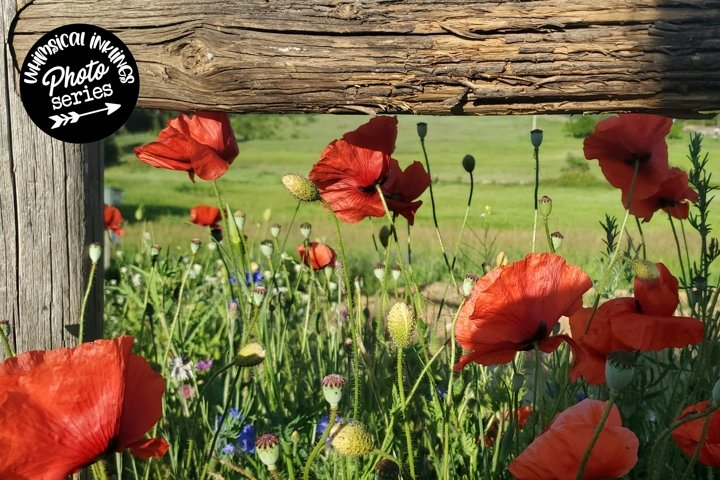 Poppies And Wildflowers Photo