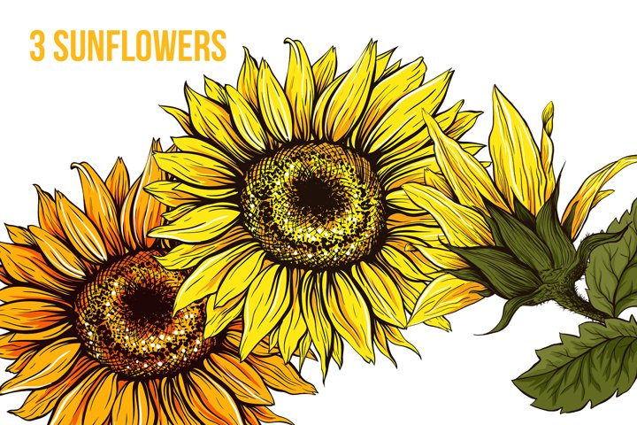 Sunflower Sublimation Design and SVG for Thanksgiving