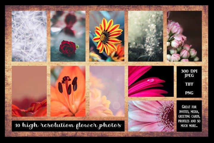 10 Lovely Flower Photos