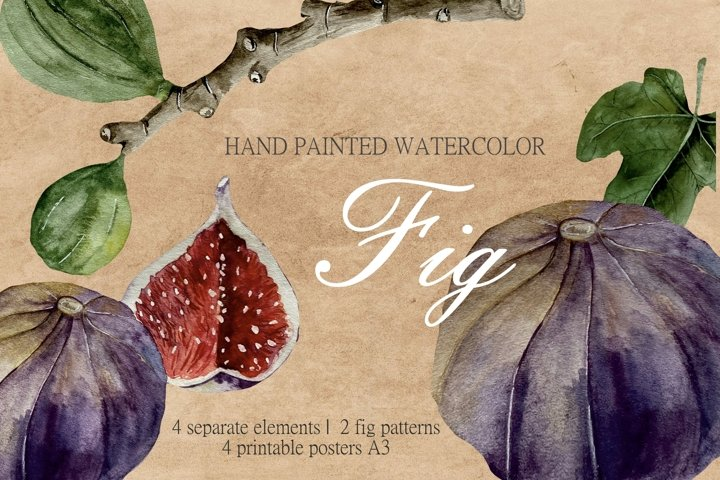 Watercolor Fig Branch and Leaf Clipart, Fig Illustration