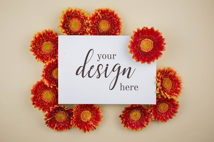 Flat lay composition with gerbera flowers blank card mock up