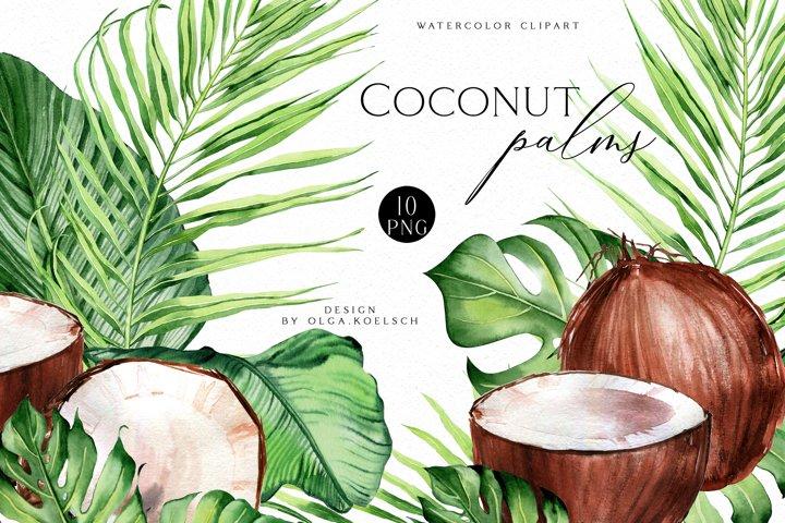 Coconut watercolor clipart, Modern tropical clipart coconut
