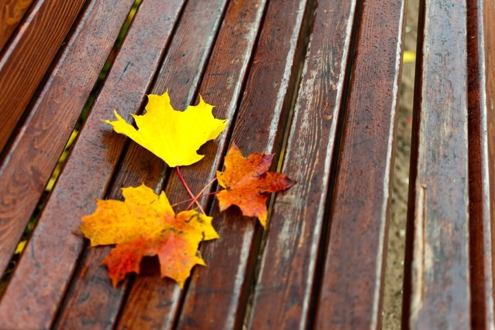 Bench on which lies a yellow maple leaf.
