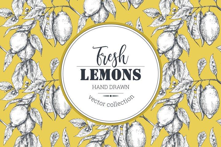 Vector lemon fruits