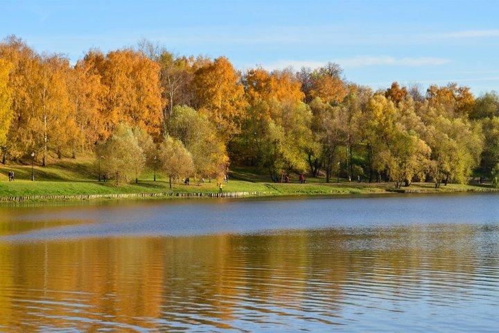 Autumn forest near the lake. Scenic autumn landscape.
