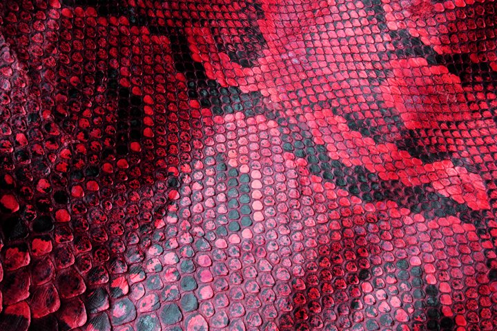 Close Up of Abstract Red Real Snake Skin Snake Print