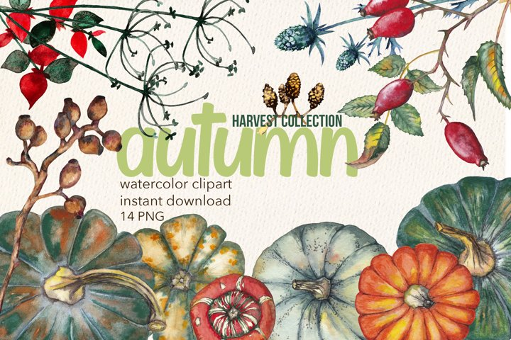 Autumn harvest clipart. Watercolor thanksgiving set. PNG