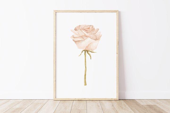 Boho rose printable, Digital rose poster, Floral wall print