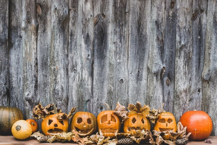 collection of autumn pumpkins for halloween