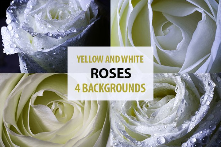 Different roses backgrounds.