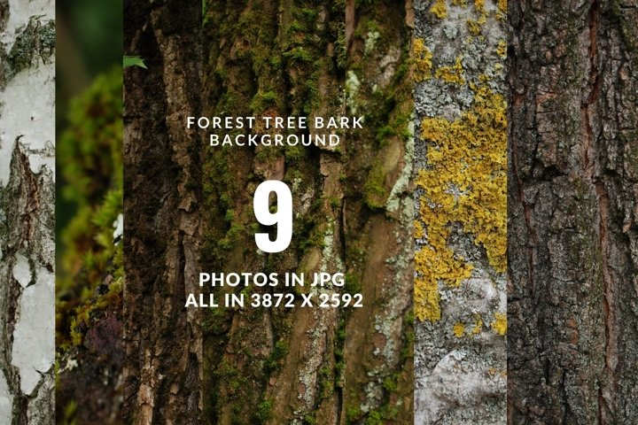 Tree bark digital photo backgrounds Vol5