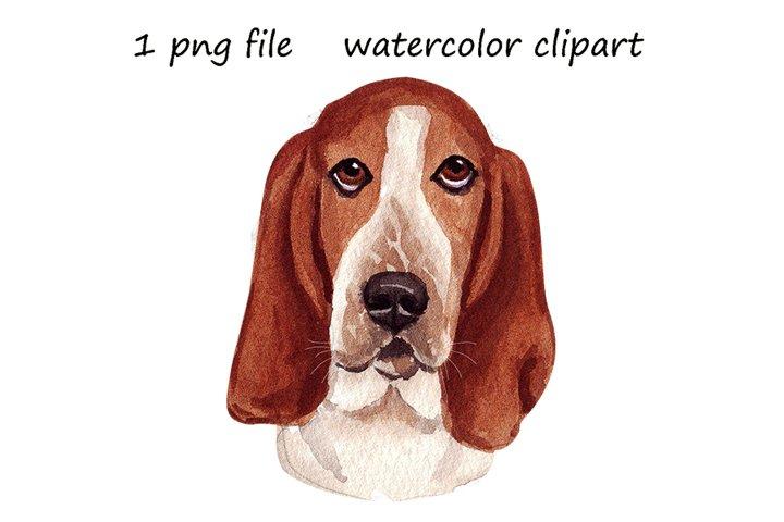 Watercolor dog png, Basset hound dog, hand drawn