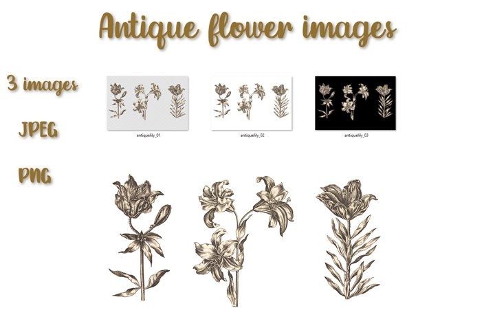 Floral illustration of lilies in antique style.
