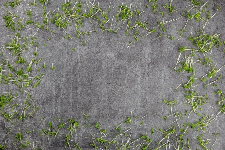 Natural gray stone, concrete background with microgreens.