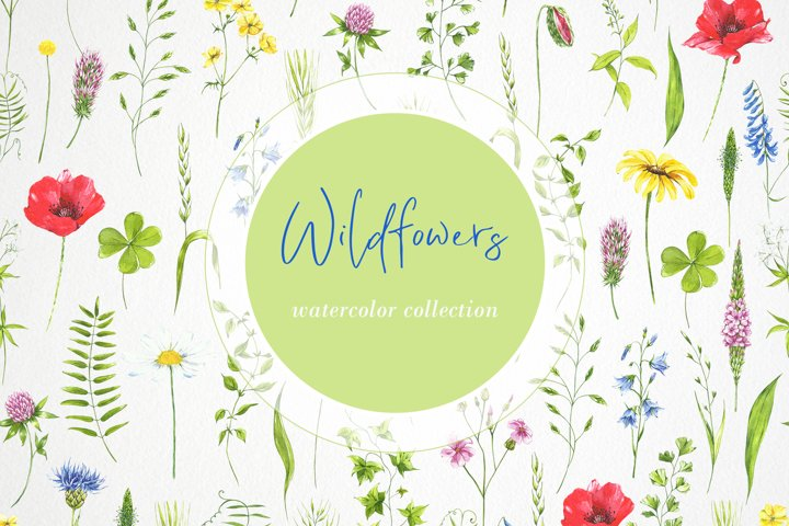 Watercolor flowers clipart. Wildflowers, leaves, plants.