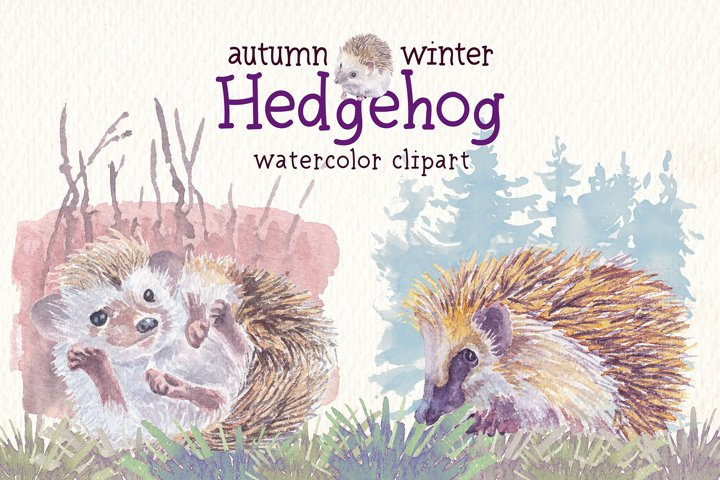 Autumn & Winter hedgehog watercolor clipart