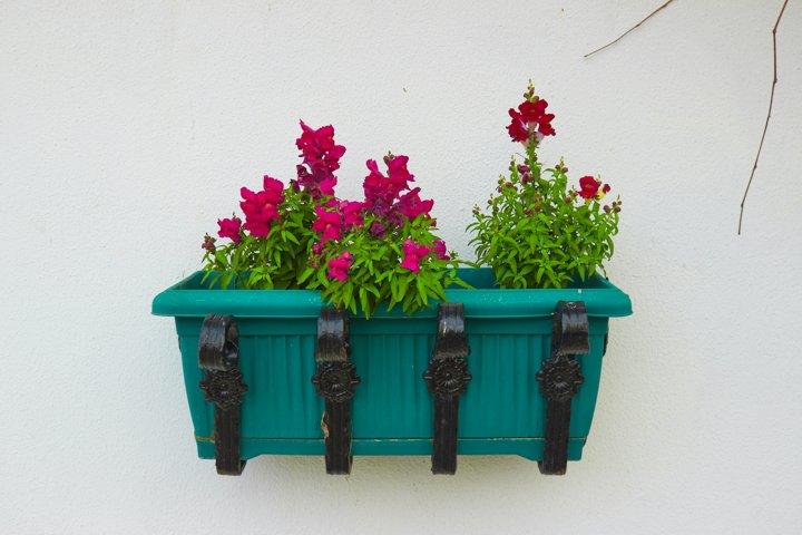 Beautiful flowers in a green pot.