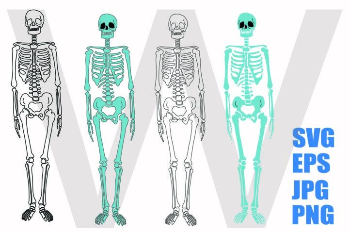 Skeleton Whole Body - SVG-EPS-JPG-PNG